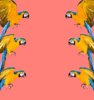 Szalona pop-artowa kolorowa ultrafioletowa tapeta z papugami ara zdjęcie nowoczesny wzór