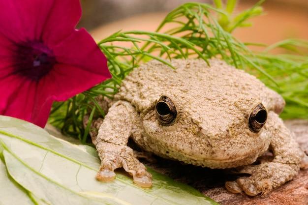 Szara drzewna żaba z kwiatem