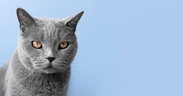 Szara kotka z monochromatyczną ścianą za nią