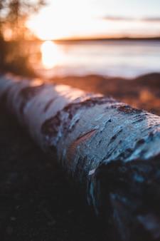 Szare drewno na ziemi