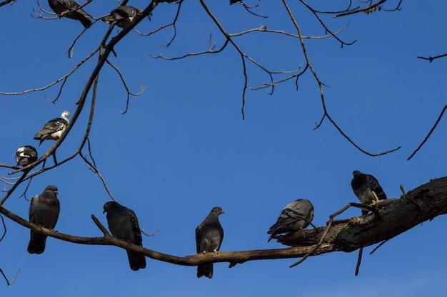 Szare gołębie na gałęziach drzew na tle błękitnego nieba