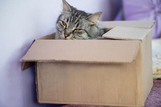 Szare paski kota w skrzynce pocztowej. dostawa żywności i zwierząt przez kurierów.