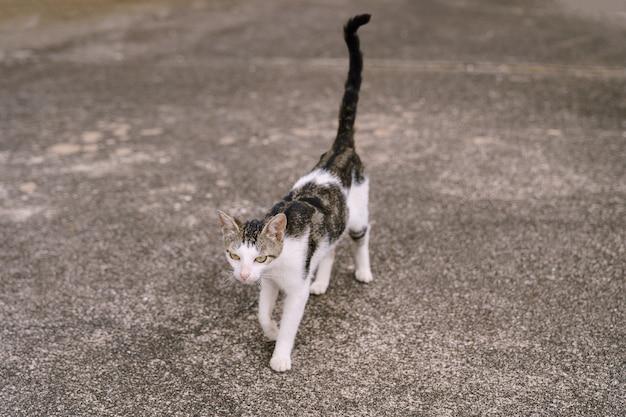 Szaro-biały kot idący ulicą