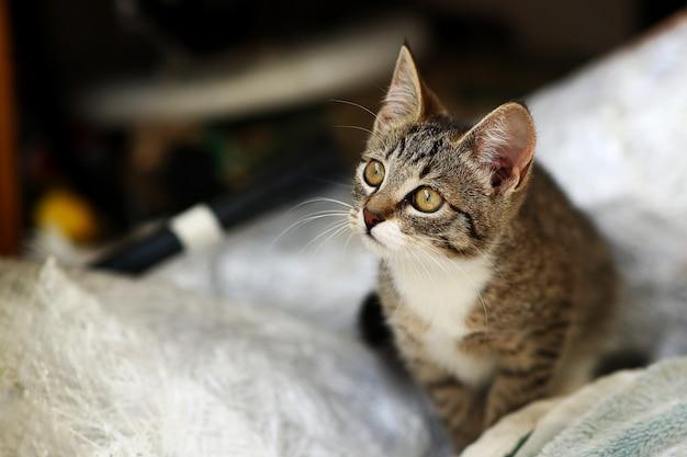 Szaro-biały kot siedzi w baclony na podłodze, białe tło ściany