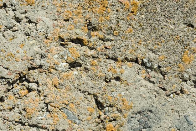 Szarość textured betonu cementu ściany zbliżenia tło