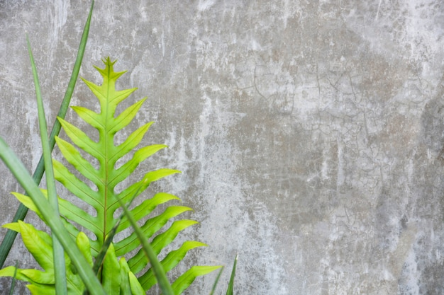 Szary betonowej ściany tekstury tło z zieloną paproci i liśćmi, kopii przestrzeń