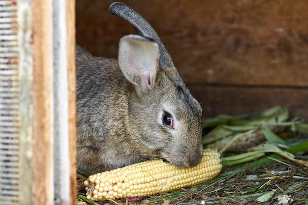 Szary i brązowy królik w klatce, z bliska