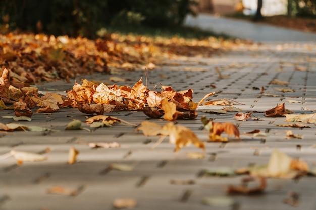 Szary kamienny bruk. kostka brukowa z żółtymi jesiennymi liśćmi