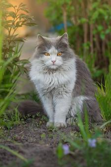 Szary kot bawiący się w ogrodzie z pięknym oświetleniem o zachodzie słońca. ładny kot siedzieć w słonecznym letnim ogrodzie. mały śmieszny kot siedzący na zewnątrz