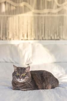 Szary kot domowy z pięknymi oczami na łóżku z ręcznie robioną makramą na tle w słońcu