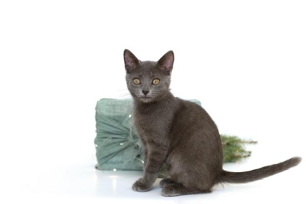 Szary kot i pakowanie prezentów w stylu furoshiki z tkaniny. koncepcja przyjazna dla środowiska. majsterkowanie. izolować