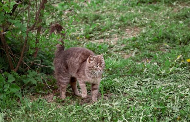 Szary kot na zewnątrz w lecie
