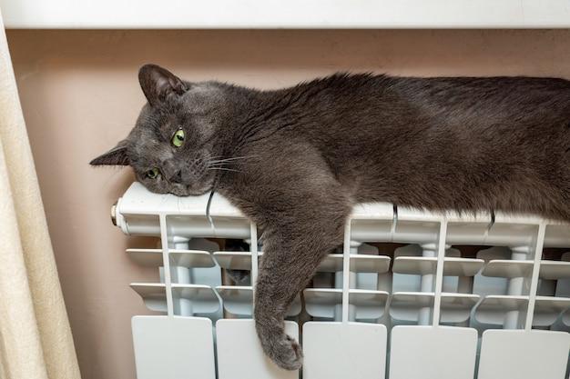 Szary kot rozgrzewa się, leżąc na baterii grzewczej