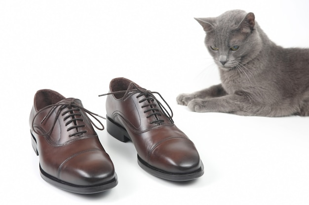 Szary kot siedzi obok klasycznych brązowych butów oxford na białym tle