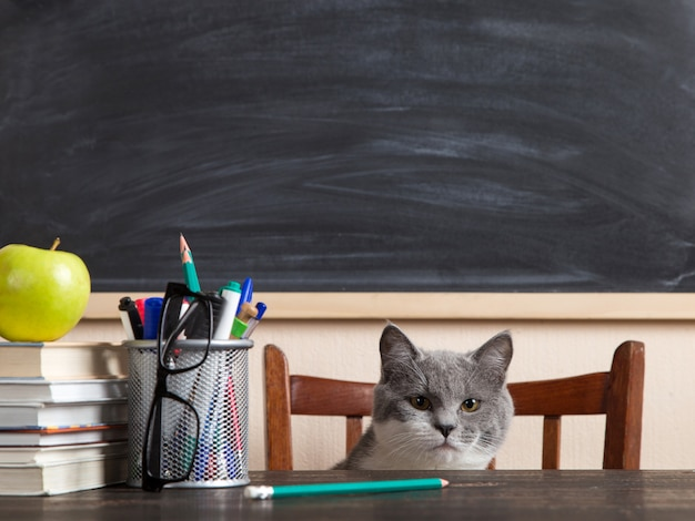 Szary kot siedzi przy stole z książkami i zeszytami i studiuje w domu.