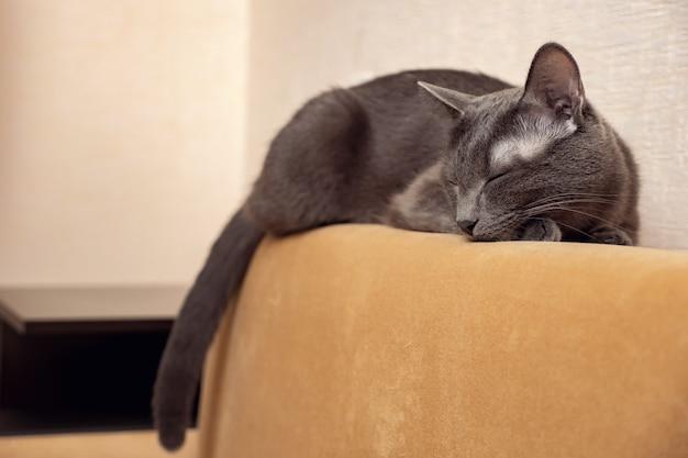 Szary kot śpi na musztardowej sofie