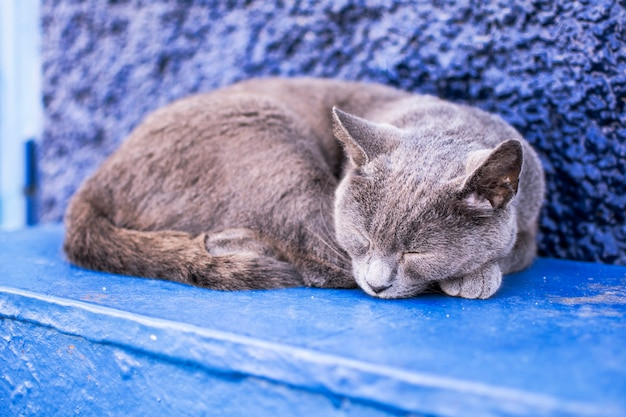 Szary kot śpi na zewnątrz