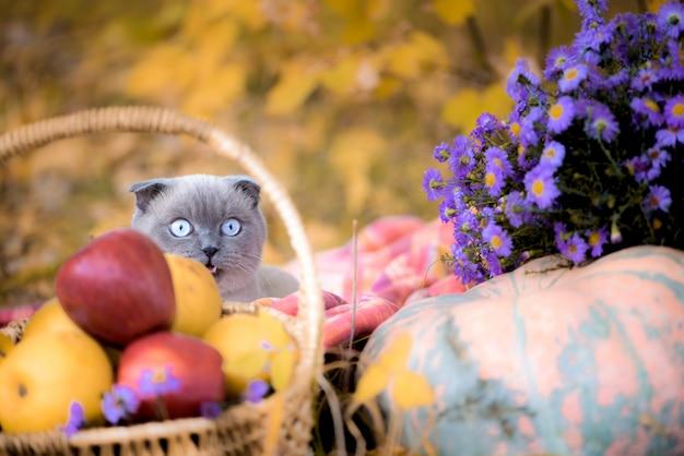 Szary kot w lesie jesienią. z dyniami, kwiatami i żółtymi liśćmi. kompozycja jesienna