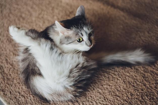 Szary kot w paski myje się lizaniem.