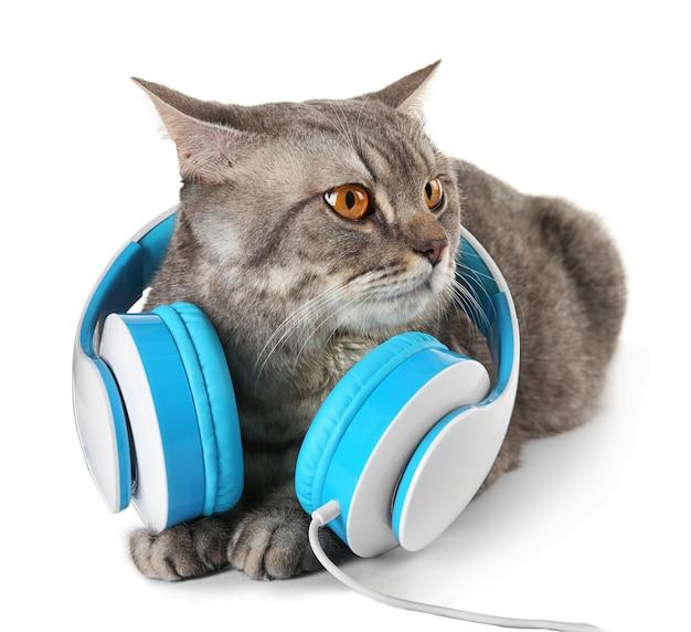 Szary kot z niebieskimi słuchawkami na białym tle