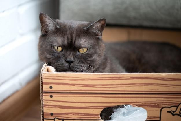 Szary kot z żółtymi oczami leży w kartonowym pudełku