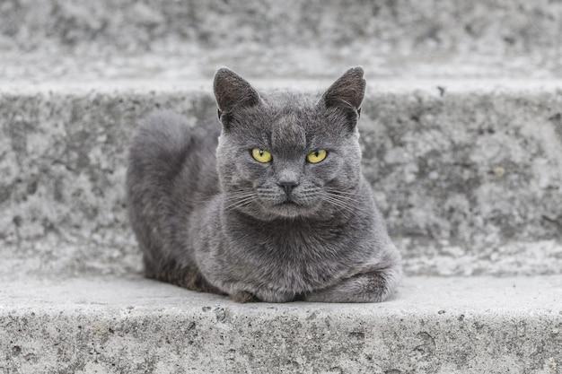 Szary kot z żółtymi oczami siedzi na betonowych schodach domu