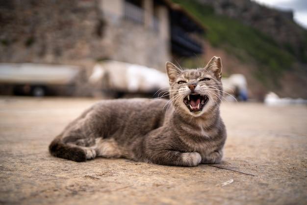 Szary kot ziewający leżąc na ziemi