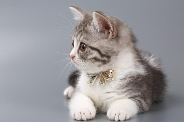 Szary kotek z kokardą na szyi siedzący na szarej powierzchni