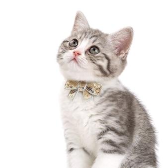 Szary kotek z kokardą na szyi siedzi na białej powierzchni i patrzy w górę