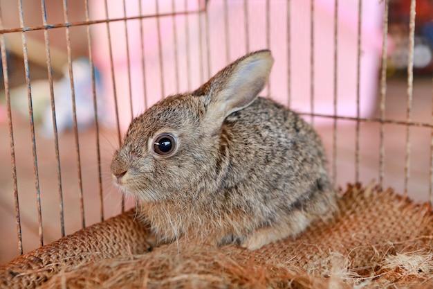 Szary królik w klatce