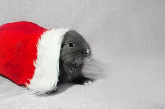 Szary młody królik w czerwonym kapeluszu santa, widok z przodu na szarym tle z miejsca kopiowania