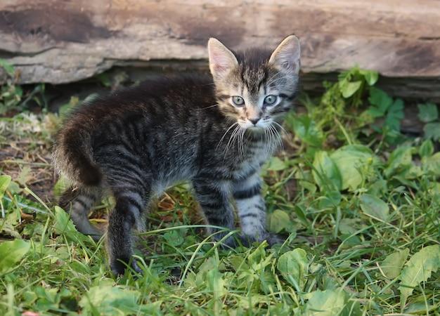 Szary, pasiasty, uroczy pręgowany kotek bawi się na zewnątrz