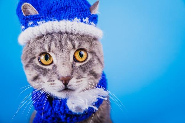 Szary pręgowany kot nosi czapkę i szalik świętego mikołaja na niebieskim tle.