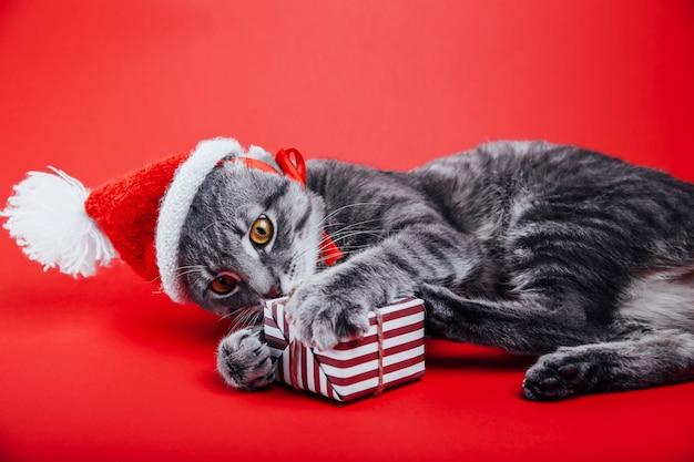 Szary pręgowany kot nosi czapkę mikołaja na czerwonym tle i bawi się pudełkiem prezentowym.
