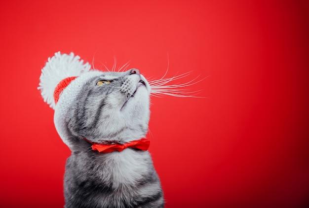 Szary pręgowany kot nosi czapkę mikołaja na czerwonym tle i spogląda w górę.