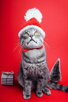 Szary pręgowany kot nosi czapkę mikołaja na czerwonym tle.