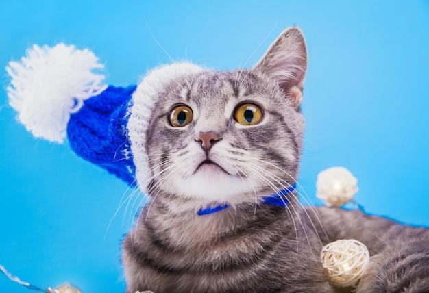 Szary pręgowany kot nosi czapkę mikołaja na niebieskim tle pokrytym girlandą.