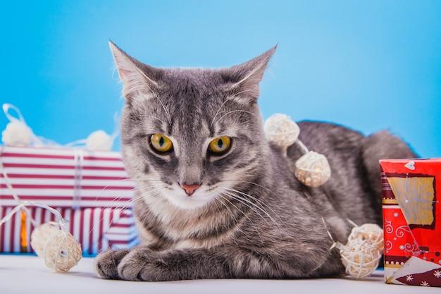 Szary pręgowany kot siedzący przy pudełkach ozdobionych lampkami.