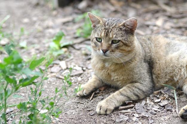 Szary pręgowany kot z zielonymi oczami