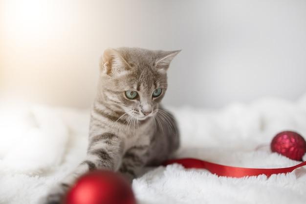 Szary pręgowany kotek z niebieskimi oczami i świąteczną piłką na kocu w salonie