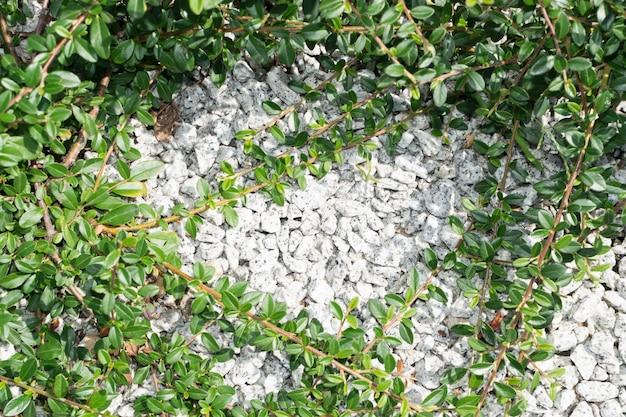 Szary żwir tło i zielone rośliny ramki