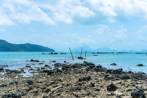 Szczątki koralowca na plaży w pobliżu wody. plaża koralowa.