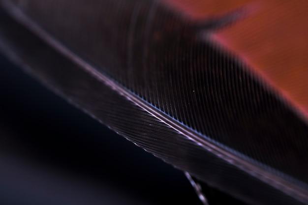 Szczegół czarny piórkowy krawędzi tło