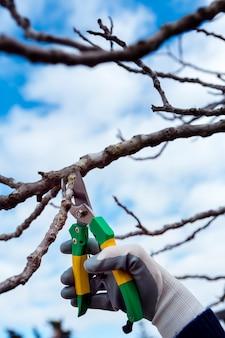 Szczegół człowiek cięcia suszonych gałęzi