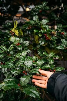Szczegół kobiecej dłoni dotykającej czarnych kwiatów z małymi czerwonymi owocami - zbliżenie