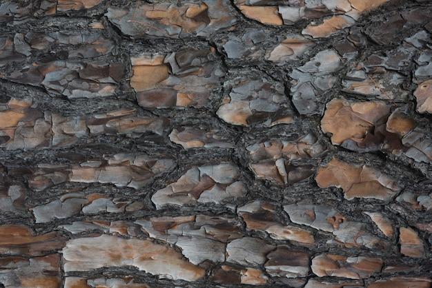 Szczegół kory drzewa w pełnej klatce