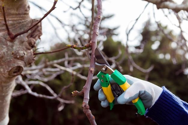 Szczegół ogrodnik cięcia suszonych gałęzi