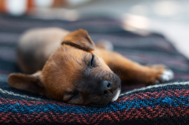 Szczegół portret dziecka czerwony pies śpi na zewnątrz.