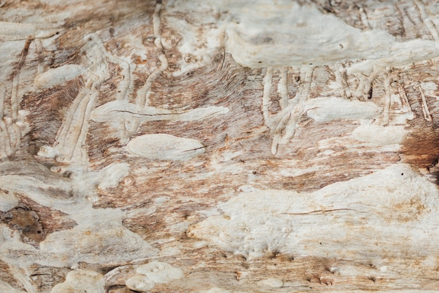 Szczegół starzejąca się drewniana tekstura