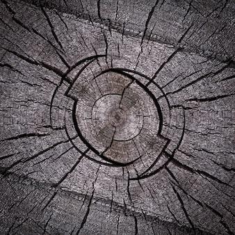 Szczegół szary suchy pień drzewa, tekstura gałęzi drzewa.